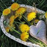 Dandelion Flower Fritters