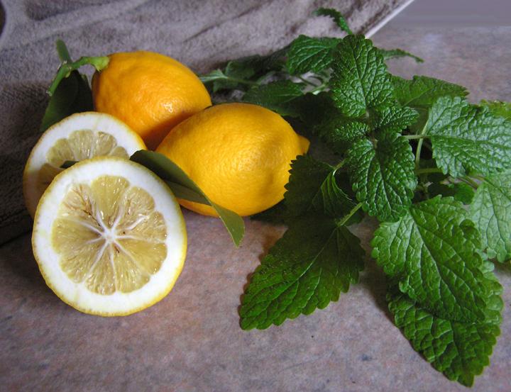 Lemon Balm Liqueur