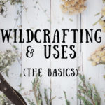 Basics of Wildcrafting: Fall