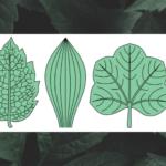 Botany: Leaves (Part 1)