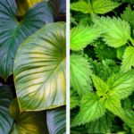 Botany: Leaf Types