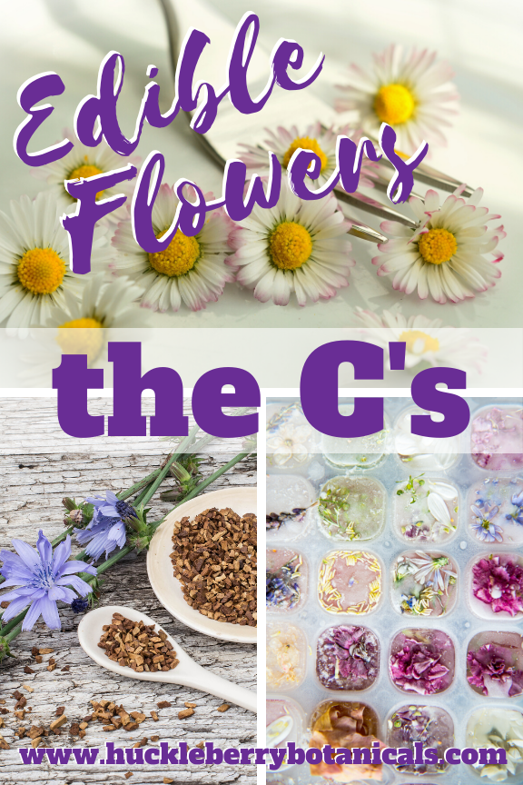 Edible flowers of calendula, carnation, chamomile, chervil and chicory used in cooking dishes