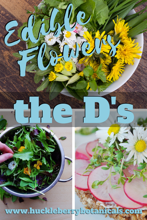 Edible flowers of dandelion, daylily and dill used in cooking dishes