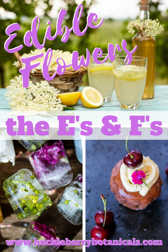 Edible flowers of elderflower, fennel and fuchsia used in cooking dishes