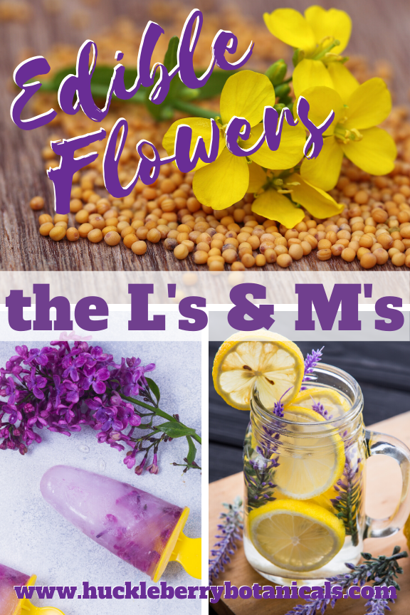 Edible flowers of lavender, lilac, mint and mustard used in cooking dishes