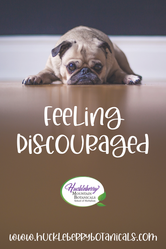 soft focus image of a pug dog with a sad or discouraged expression