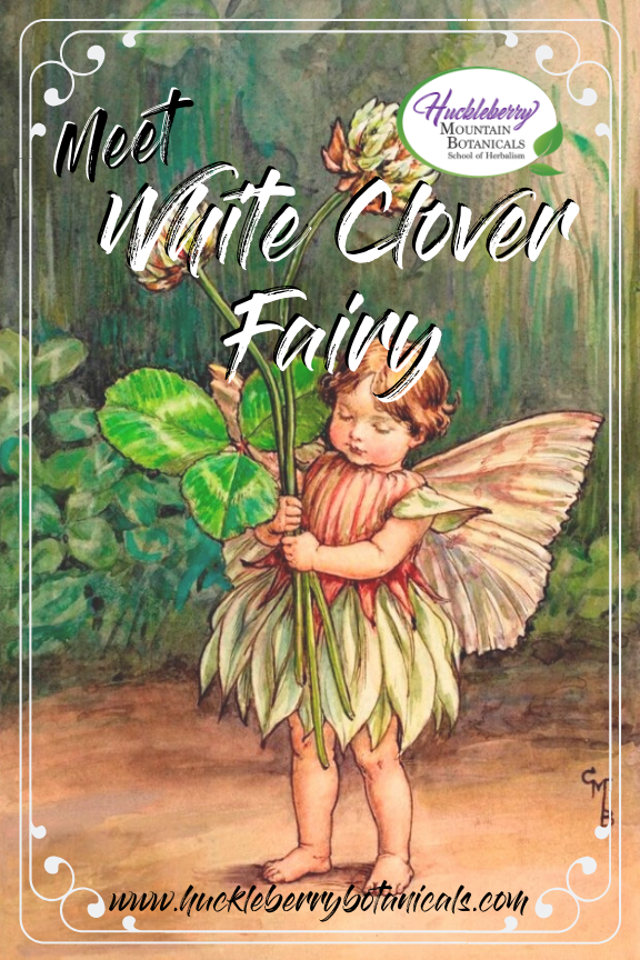 vintage illustration of a white clover fairy by early-20th century artist Cicely Mary Barker