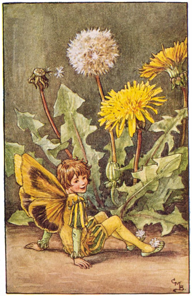 vintage illustration of a dandelion fairy by early-20th century artist Cicely Mary Barker