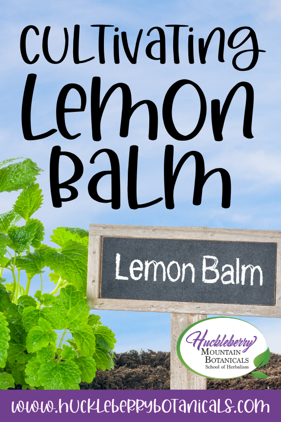bright green lemon balm in a garden with a chalkboard sign