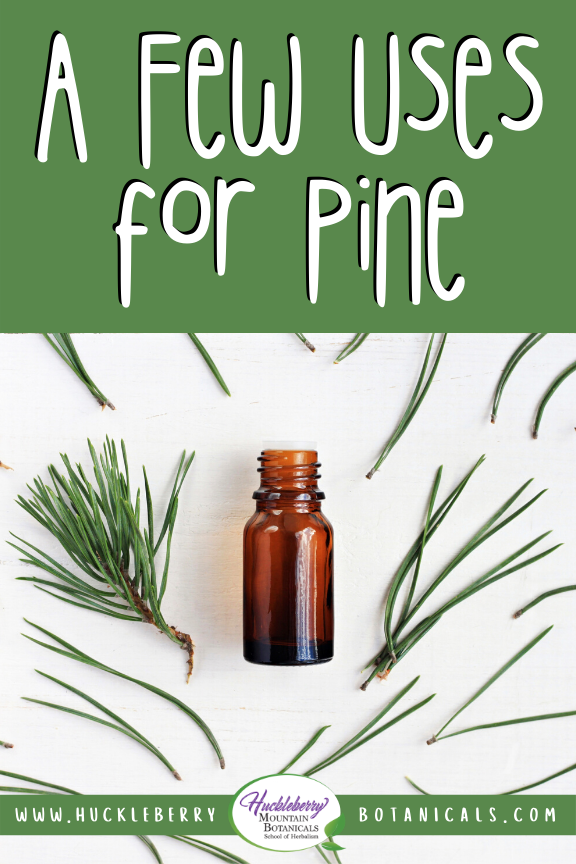 isolated image of pine needles and an amber glass vial