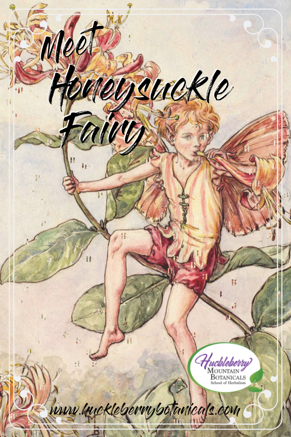 vintage illustration of a honeysuckle fairy by early-20th century artist Cicely Mary Barker