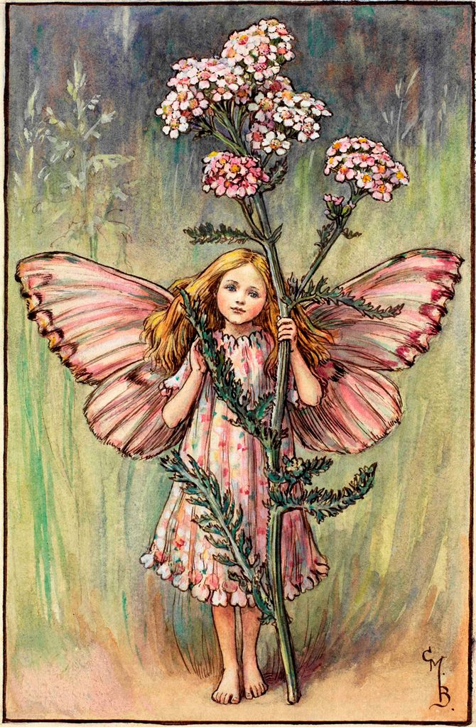 vintage illustration of a yarrow fairy by early-20th century artist Cicely Mary Barker