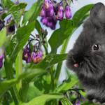 Rabbit Manure & Comfrey Fertilizer